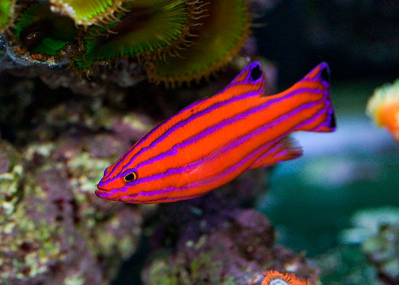 10 of the Most Expensive Tropical Fish - TheRichest
