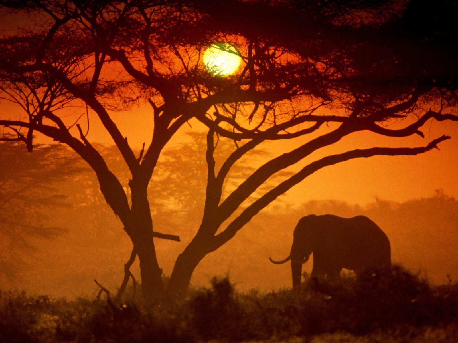 http://www.damlesafaris.com/sites/default/files/kenya-amboseli-national-park-.jpg