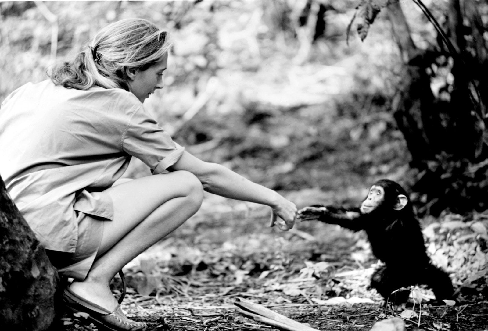 10 Extraordinary Facts About Jane Goodall