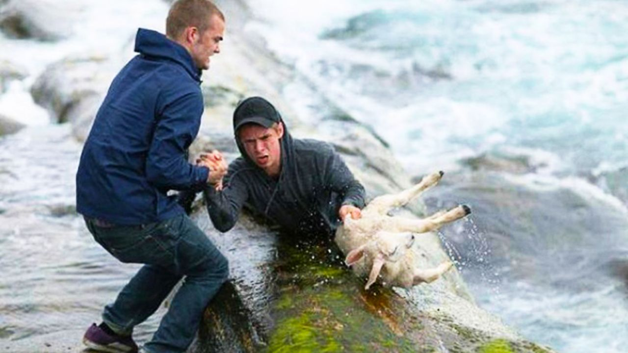 Amazing People Who Rescued Wild Animals