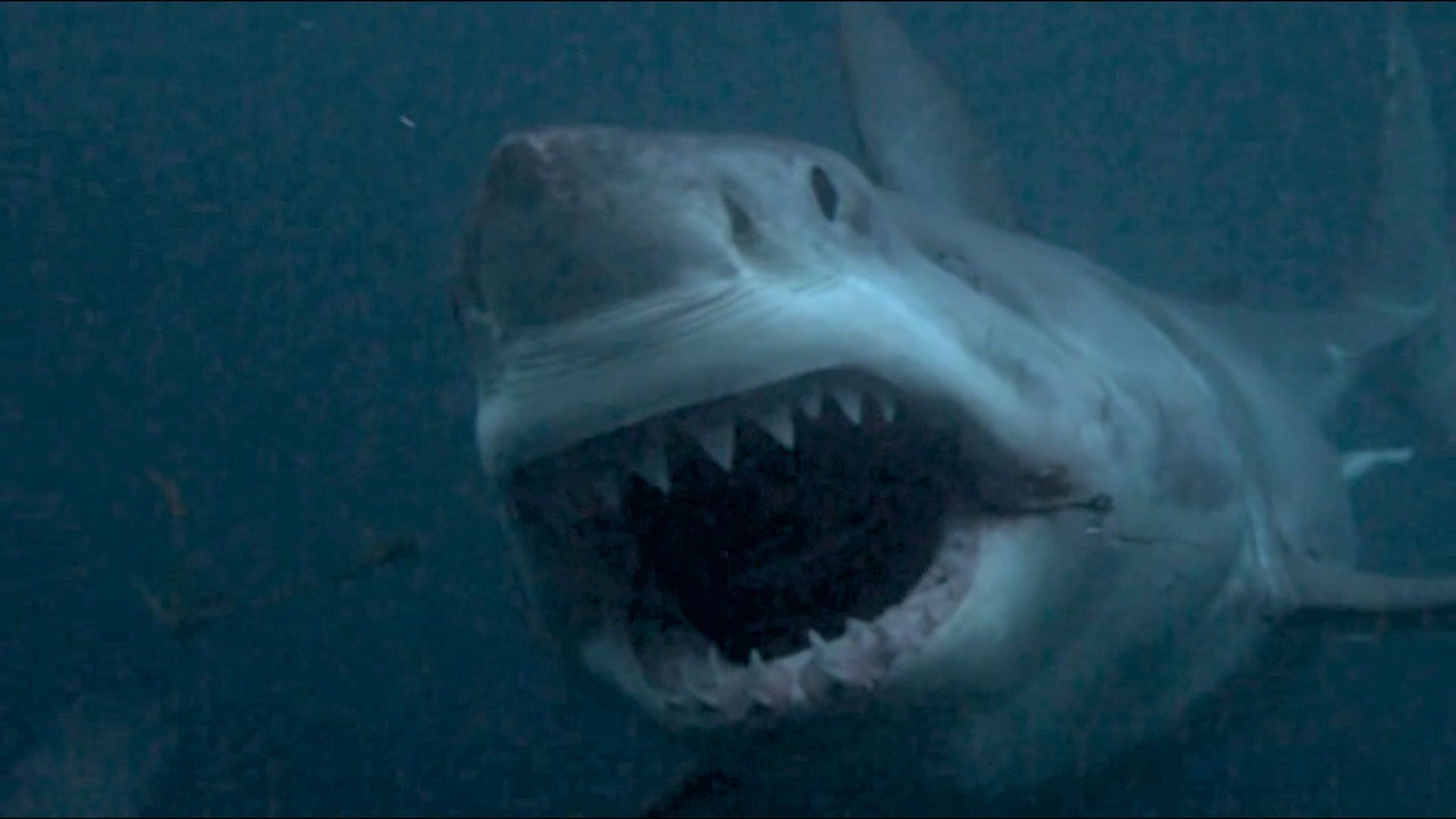 Top 10 Real-Life Legendary Man-Eating Sharks