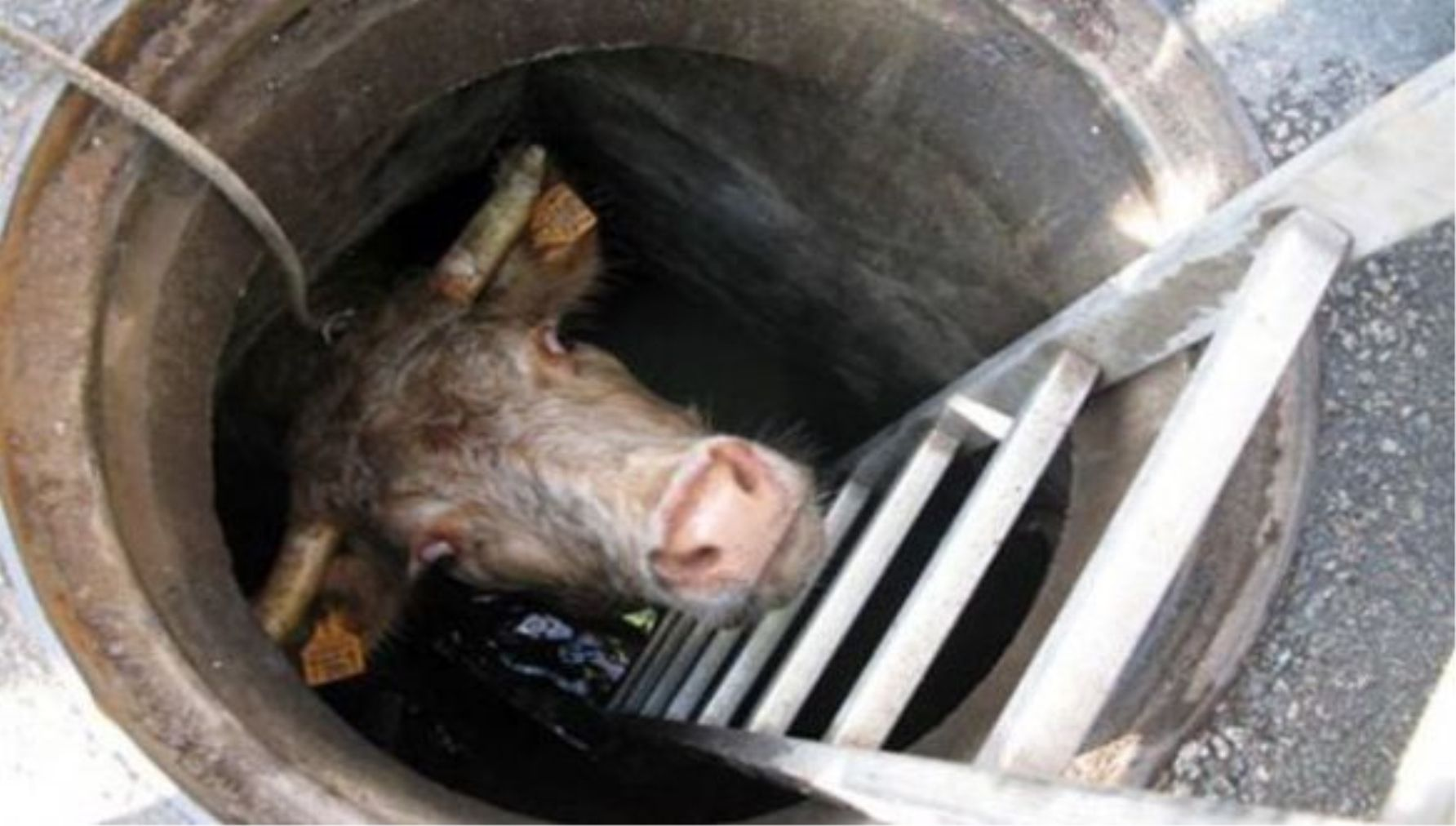 15 Most Shocking Things Ever Found In A Sewer Therichest